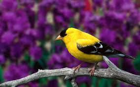 desktop hd wallpapers of and birds download