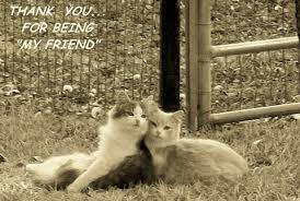 best friends thank you cats free thank you ecards greeting cards