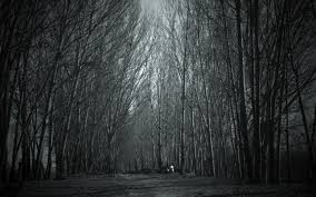 spooky forest haunted forest wallpaper ghost storys