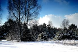 free images landscape tree nature forest mountain snow