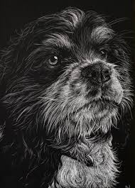 affenpinscher india scratchboards u2014 brittany johnson art
