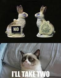 21 Of The Best Grumpy - grumpy cat easter cat lovers