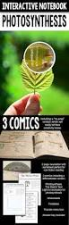 best 25 photosynthesis ideas on pinterest plant science best