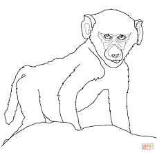 coloring page elegant drawings of baboons baboon monkey coloring