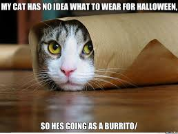 halloween cat meme adorable burrito by dman489 meme center