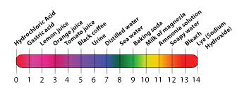 acids bases and the ph scale interactive tutorial