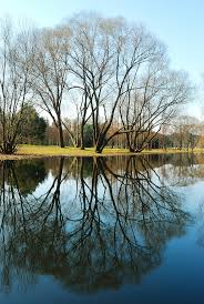 reflections of trees mirrored upon the still water paul chong