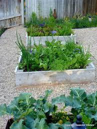 cool season veggies to harvest now