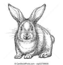 vintage rabbit vintage rabbit sketch rabbit sketch vector