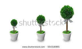 growing plant concept small artificial tree stock photo 554516965
