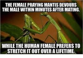 Mantis Meme - 25 best memes about praying mantis praying mantis memes