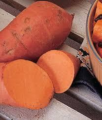 georgia jet sweet potato seeds and plants vegetable gardening at