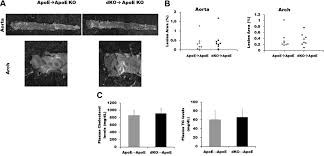 a2b adenosine receptor regulates hyperlipidemia and