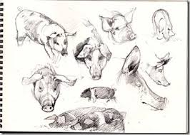pencil and leaf trotters and more pig sketches u2026