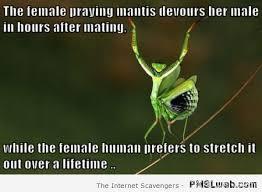 Mantis Meme - 21 the female praying mantis vs the female human meme pmslweb