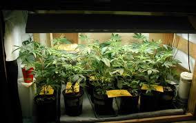 250 watt hid grow lights what s the cost of electricity to grow marijuana grow weed easy