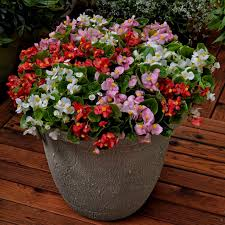 83 best window boxes and balcony railing planters images on