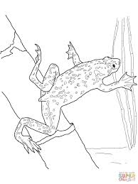 african dwarf frog coloring page free printable coloring pages