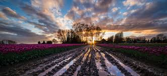 skagit valley tulip festival bloom map skagit tulip festival photo tours 2017 registration os now open