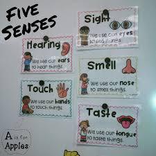 best 25 5 senses activities ideas on pinterest senses