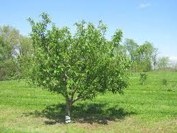 75 best planting u0026 growing images on pinterest planting trellis
