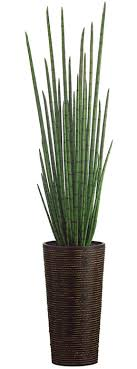 trees potted plants snake grass grasses and snake