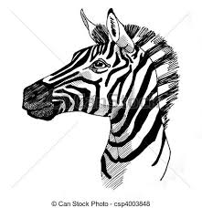 stock illustration of zebra portrait ink drawing of plains zebra