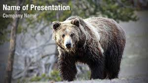 grizzly bear powerpoint templates grizzly bear powerpoint