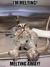 Angry Cat Meme Generator - angry wet cat meme generator imgflip on wet cat meme broxtern