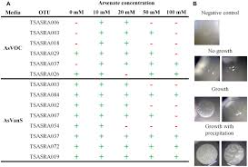 frontiers culturable associated bacteria of the sponge theonella