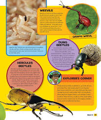 national geographic kids everything insects all the facts photos