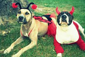 best of oug top dog halloween costumes naperville edition