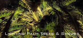 how to light trees palms and large shrubs in the landscape