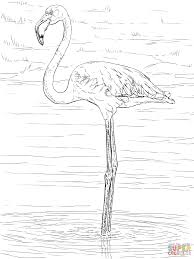 pink flamingo free coloring pages on art coloring pages