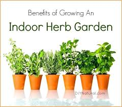 indoor herb garden kits to grow herbs indoors hgtv indoor herb garden indoor herb garden kit with light tekino co