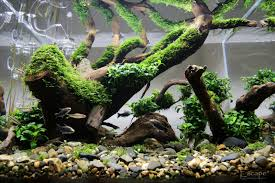aquascaping aquariums archives ron beck designs