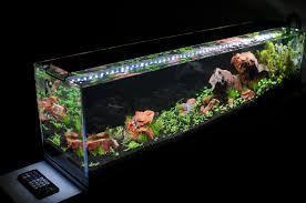 best led light for planted tank best led for aquarium plants noveltp com