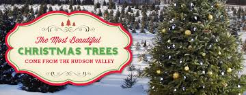 evergreen christmas tree farm welcome