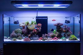 t5 lighting fixtures for aquariums hybrid lighting t5 bulb choices reef2reef saltwater and reef