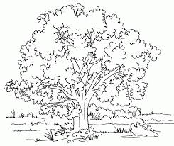 tree coloring pages printable pictures trees color plants