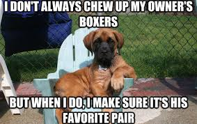 Boxer Meme - 26 most funny dog memes that will make your day page 3 of 5