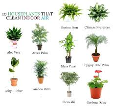 types of indoor plants common flowering house plants pictures