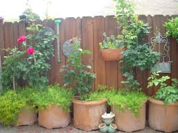 backyard rose fertilizers under the solano sun anr blogs