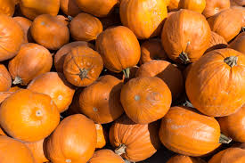 halloween images free download free images plant fruit orange food harvest produce