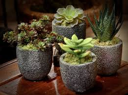succulent arrangements mini succulent arrangements