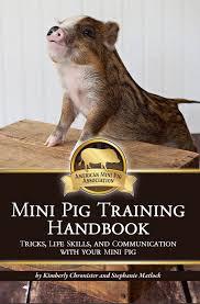 potty trainings tips american mini pig association