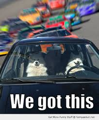 Dog In Car Meme - dogs in the car meme we got this dogs car animal race driver