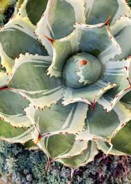 Succulent Gardens Ideas Succulent Gardens Landscaping Ideas For Your Front And Backyard