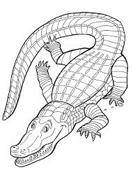 Reptile Coloring Pages For Kids Many Interesting Cliparts Reptile Coloring Pages
