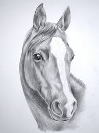beautiful and easy drawings to draw of horses 1000 ideas about